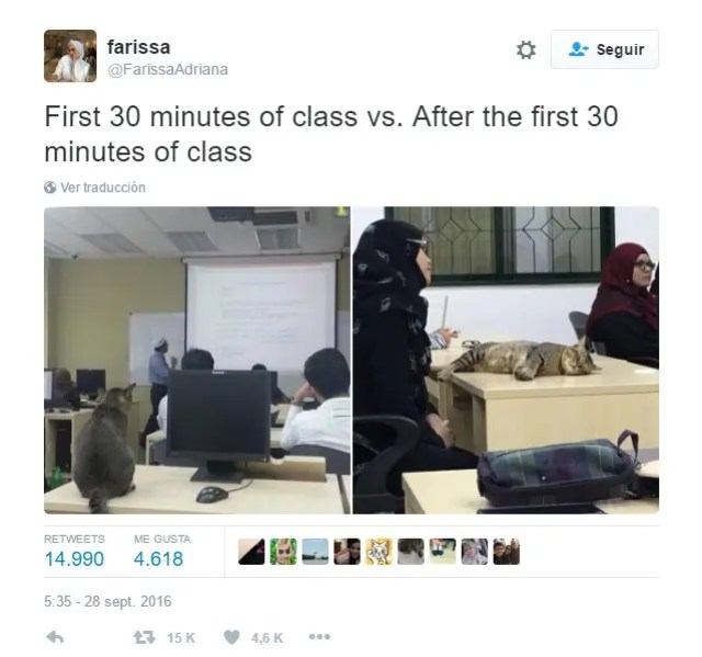 gato_en_clase_1
