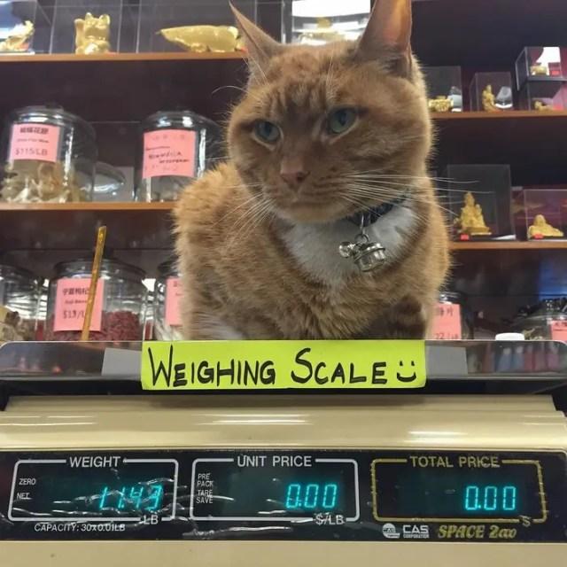 gato_en_supermercado_3