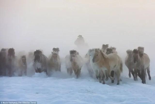 caballos-yakutos-12