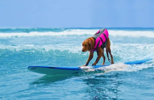 nino-autista-y-perro-surfista-6