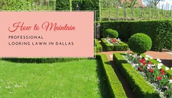 Lawn In Dallas