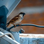 Ways to Keep Birds Off Your Building