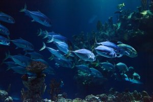 Types of Live Foods for fish