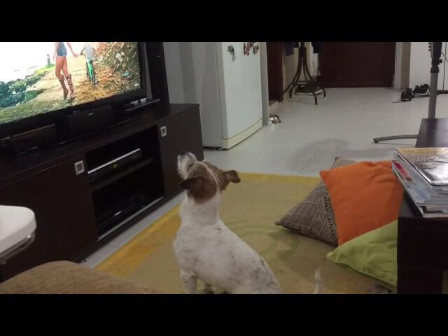 dog listening despacito and his reaction