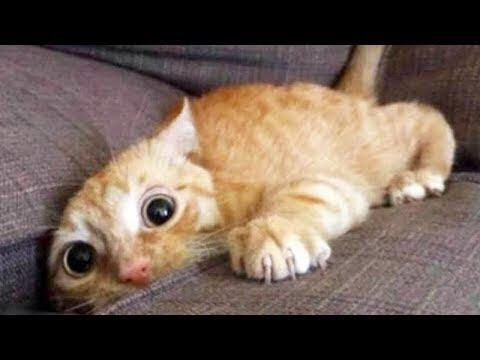 Top 200 Highlights of Animals on Vine – FUNNY Animals