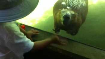 Beaver Waves Back To Friendly Boy At Zoo