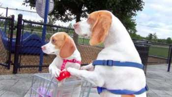 Dog Pushes Puppy In Shopping Cart