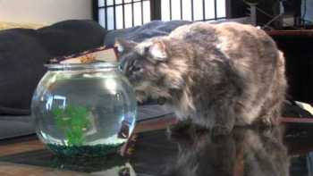 Remote Control Flying Shark Balloon Scares Cat