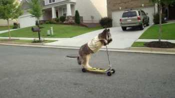 Dog Rides Scooter