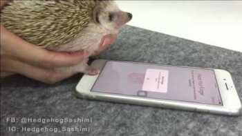 Hedgehog Paw Unlocks iPhone