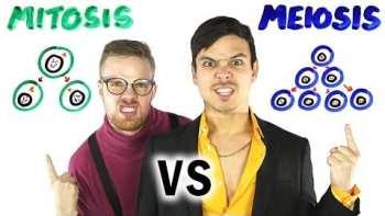 Science Rap Battle: Mitosis vs Meiosis