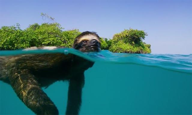 Cute Cartoon Sloth Wallpaper A Sloth S Search For Love Planet Earth Ii Viral Viral