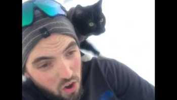 Sledding With A Cat