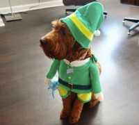 Elf Costumes For Dogs - Costume Model Ideas