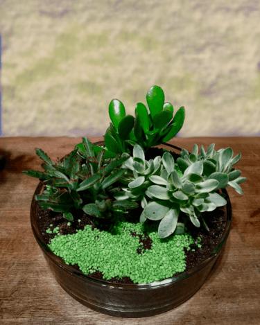 arreglo de plantas crasas en base de cristal