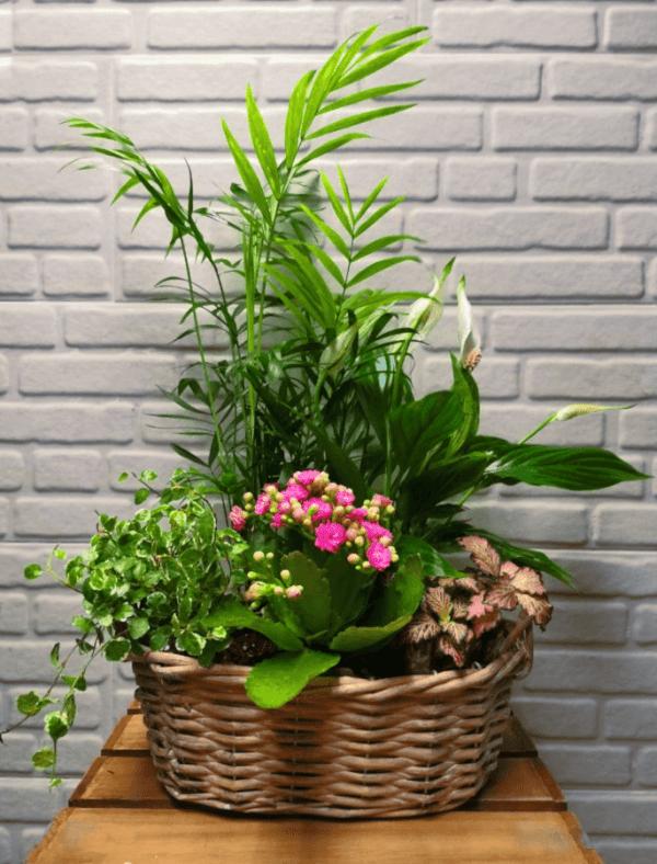 Arreglo de plantas en base de mimbre