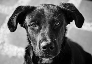 different_dog-300x210