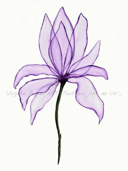 Peinture à l'aquarelle d'une fleur violette tout en transparence ressemblant à de l'organza réalisé par l'artiste peintre Virginie Brassart