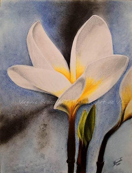 Dessin aux pastels secs d'une fleur de tiaré sur fond bleu réalisé par l'artiste peintre Virginie Brassart