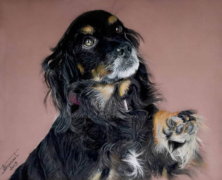 Dessin aux pastels secs d'un chien noir et feu réalisé par l'artiste peintre Virginie Brassart