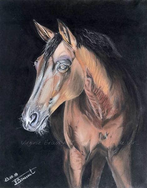Dessin aux pastels secs d'un cheval bai sur fond noi réalisé par l'artiste peintre Virginie Brassart