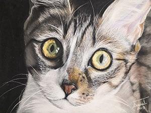 Dessin de chat gros plan aux pastels secs