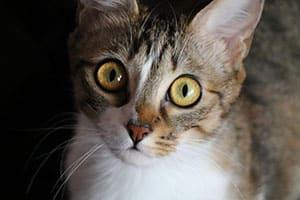 Photo référence d'un chat avant dessin