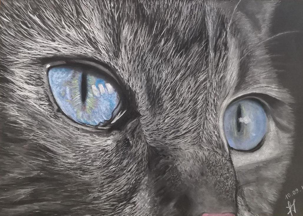 Dessin yeux de chat gris en gros plan aux pastels secs