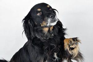 Photo référence d'un chien noir avant le dessin