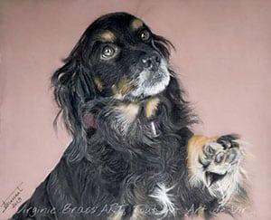 Dessin de chien noir aux pastels secs