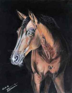Peinture aux pastels secs d'un cheval bai lumineux émergeant d'un fond noir, réalisé par l'artiste peintre et portraitiste animalière Virginie BRASSART