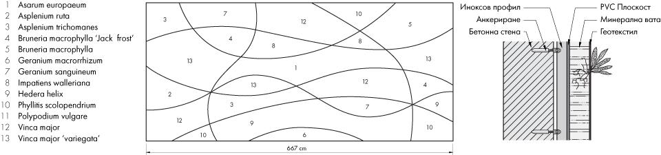 Екстериорна вертикална градина - видов състав и детайл