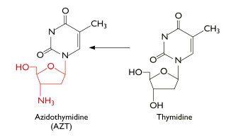 AZT inhibits XMRV