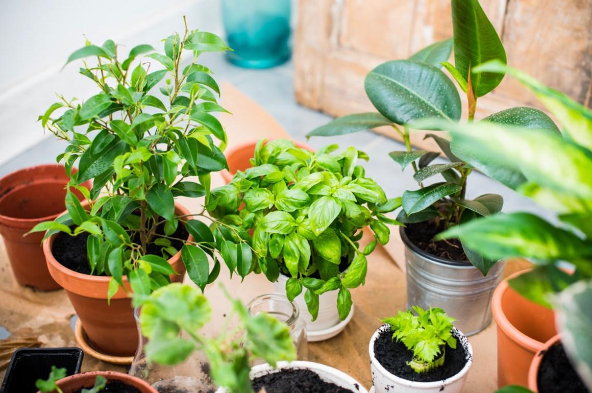 Fertilizzante naturale per orto in città