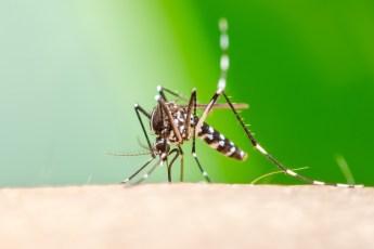 come allontanare le zanzare naturalmente - rimedi casalinghi