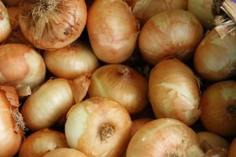 come conservare le cipolle fresche