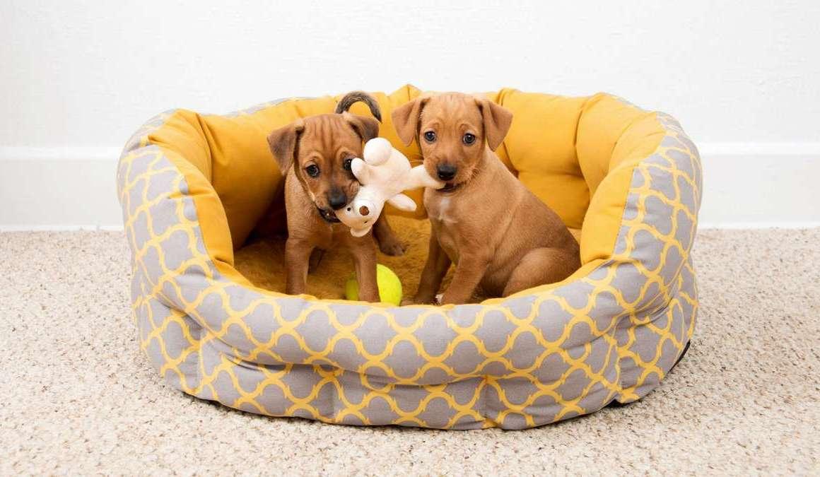 cuccioli di cane in cuccia
