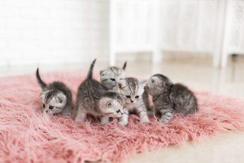 cinque cuccioli di gatto sul tappeto