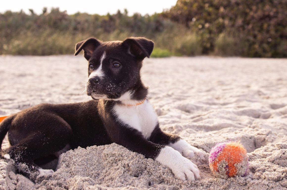 cane con palla in spiaggia