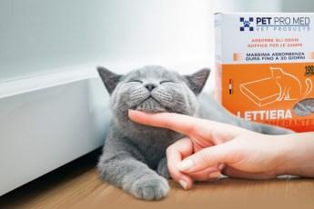 gatto grigio ed ecolettiera pet pro med - virosac magazine