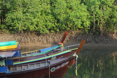 Thung Yee Pheng Mangrove Forest