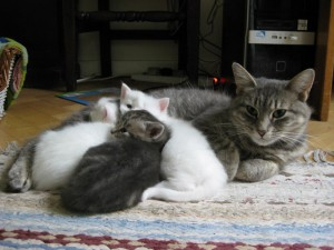 Peter Owen Jones cat Mertyl with kittens