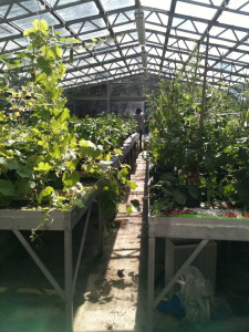 Beautiful green houses at Myatt's Field park
