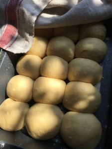 Baby brioche dough balls triple in size