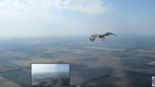 Vidéo. Un oiseau percute la vitre du cockpit d'un avion