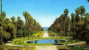 Huit bonnes raisons de visiter les jardins et forêts d'Alger