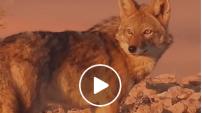 « Le Monde perdu » : cette Algérie sauvage et méconnue – Vidéo