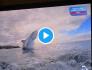 Images impressionnantes de requins bondissant hors de l'eau – Vidéo