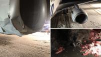 Un avion heurte un ours brun lors de son atterrissage en Alaska – PHOTOS