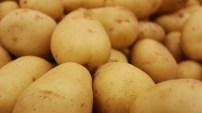 Connaissez-vous la fécule de pomme de terre ?